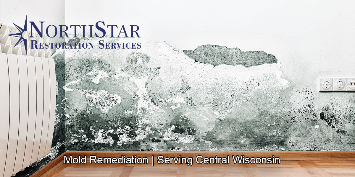 Professional black mold remediation in Athens, WI