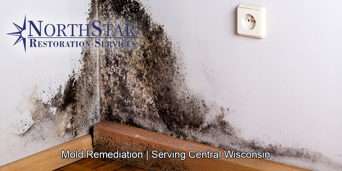 Professional black mold removal in Marathon City, WI