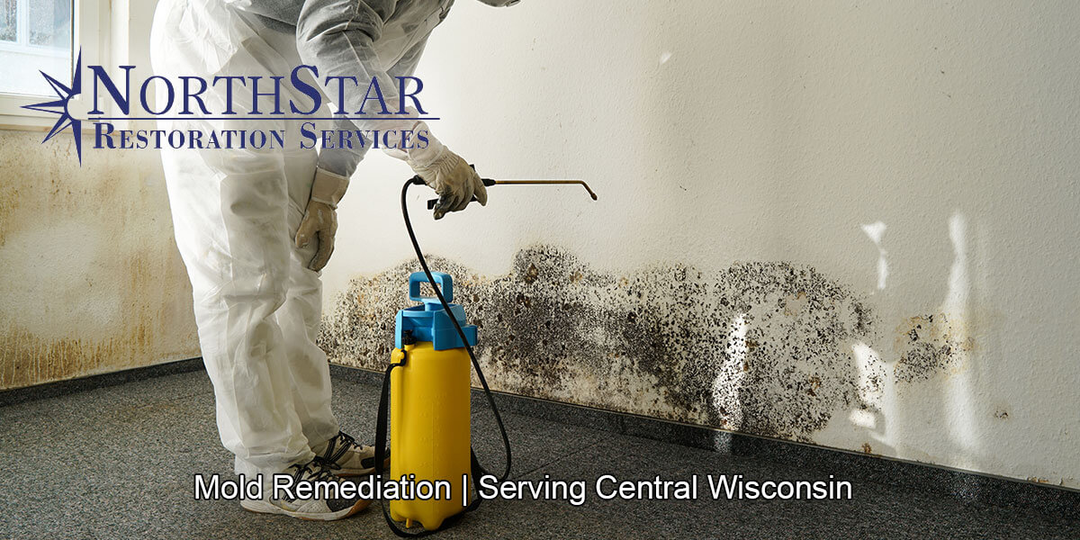 Professional black mold remediation in Auburndale, WI